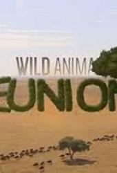 Встречи старых друзей (Wild Animal Reunions)